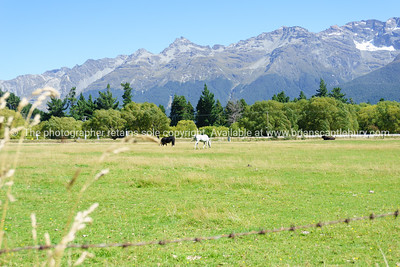 Countryside at Glenorchy.