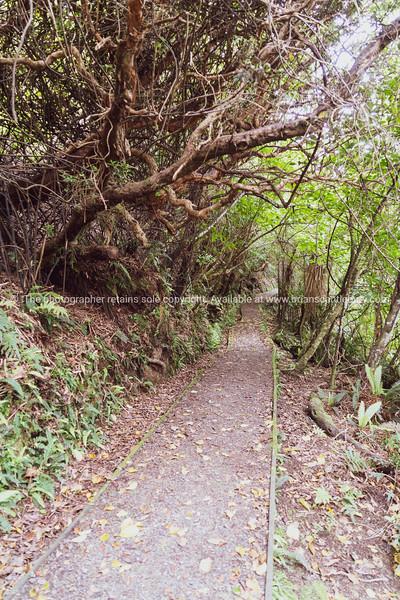 Primeval forest walk from Golden Bay on Stewart Island