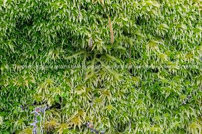 Sphagnum Moss growing deep and moist