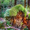 New Zealand bush scenes
