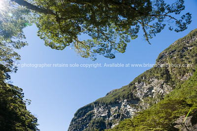 Looking up - the Routeburn Track.