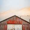 No Parking painted on old wooden doors of rusty red corrugated iron shed on misty morning