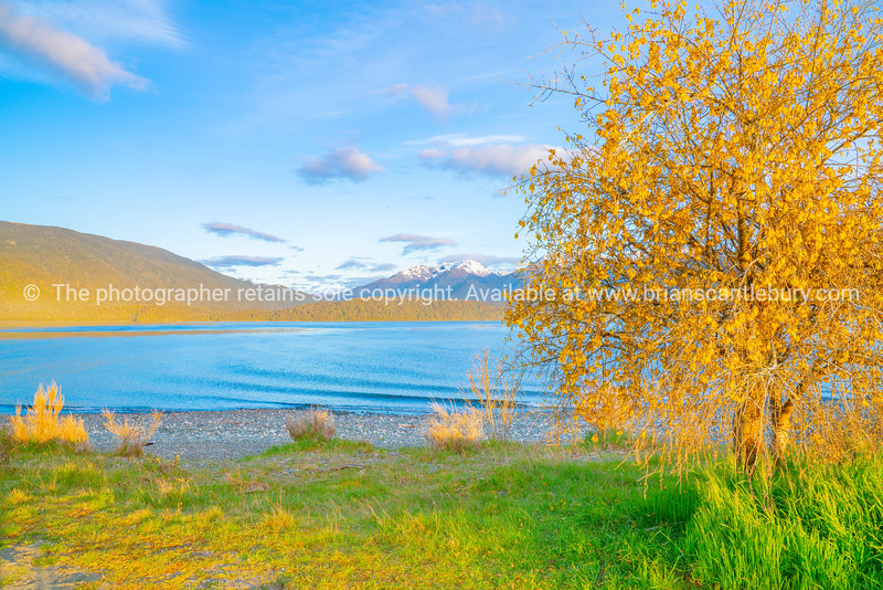 Low sun on bright blue water and catches the yellow hills and kowhai flowers