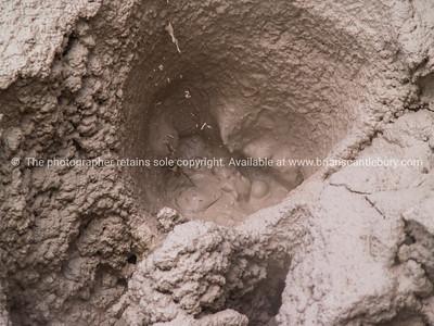 Volcanic bubbling mud. Wai-o-tapu.