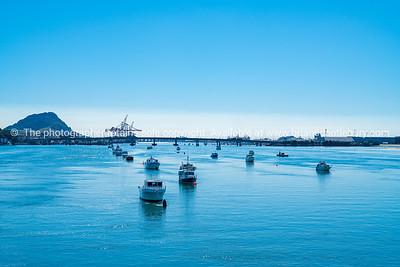 Tauranga harbour (1 of 19)
