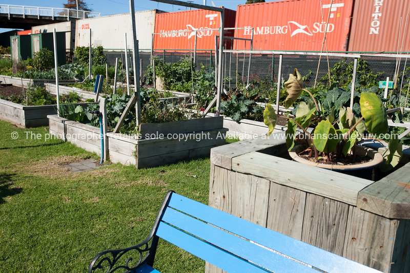 """Community garden plots, Otumoetai, Tauranga.<br /> Train passes in background. See;  <a href=""""http://www.blurb.com/b/3811392-tauranga"""">http://www.blurb.com/b/3811392-tauranga</a> mount maunganui landscape photography, Tauranga Photos; Tauranga photos, Photos of Tauranga Also see; <a href=""""http://www.brianscantlebury.com/Events"""">http://www.brianscantlebury.com/Events</a>"""