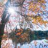 Last of autumn leaves.