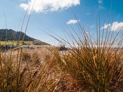 Tauranga scenics. Mount Maunganui beyond the beach grass of Matakana Island. See; www.blurb.com/b/3811392-tauranga mount maunganui landscape photography, Tauranga Photos; Tauranga photos, Photos of Tauranga Also see; http://www.brianscantlebury.com/Events