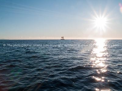 Maori sailing waka off Tauranga coast.