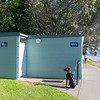 Black dog waits tied to post outside public toilet block
