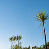 Long slender leaves of New Zealand cabbage tree against blue morning sky catching rising sun an track to summit of Mount Maunganui