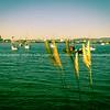 Old fashioned style image Pilot Bay, Tauranga.