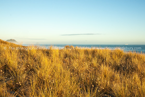Blue sky, blue sea, golden grass on Papamoa sand dunes.