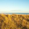 Blue sky, blue sea, golden grass on Papamoa sand dunes.