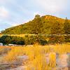 Beach grass golden in sunrise