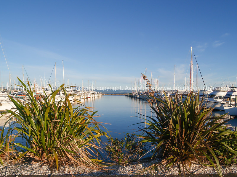 Tauranga Marina piers and boats in calm of morning