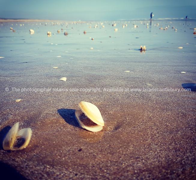 Retro style image seashells on seashore.