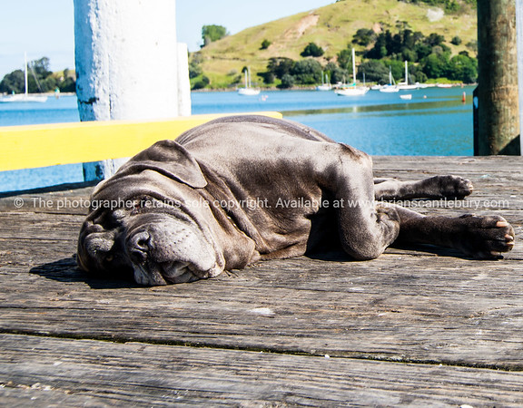 Asleep on Coronation Pier