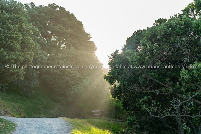 Walking path around Mount Maunganui between pohutukawa trees into sun