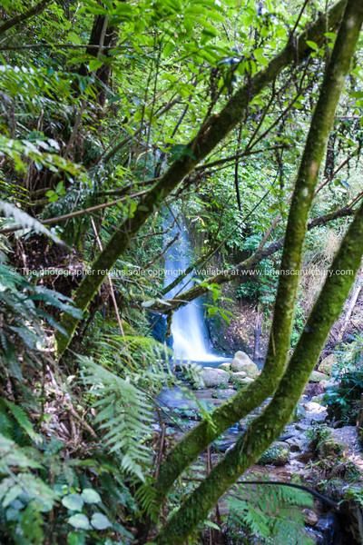Water fall through lush green bush.