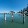 Norfolk Pines line Pilot Bay leading tp landmark Mount Maunganui from Salisbury Wharf