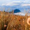 Papamoa beach, thorugh the marram to Mount Maunganui