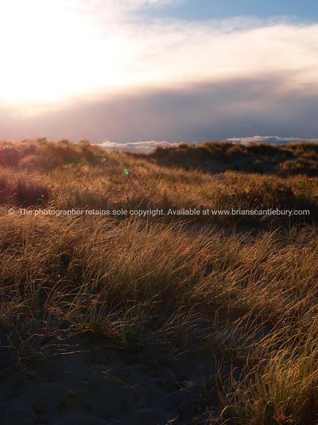 Papamoa dunes