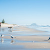Papamoa Beach. People and pets enjoy time at the beach.