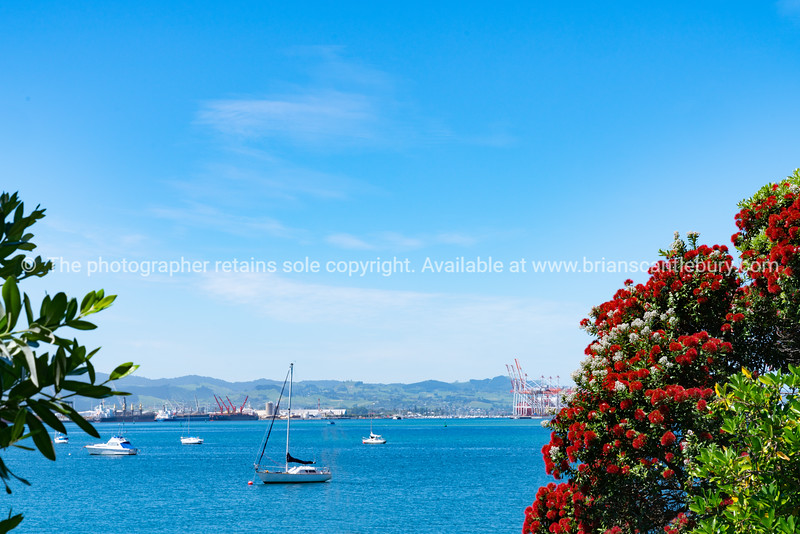 View between pohutukawa in bright red bloom on base of Mount Maunganui across Pilot Bay to wharves.