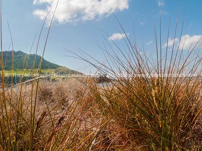 Mount through beach grass