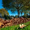 Autumn leaves fall on street