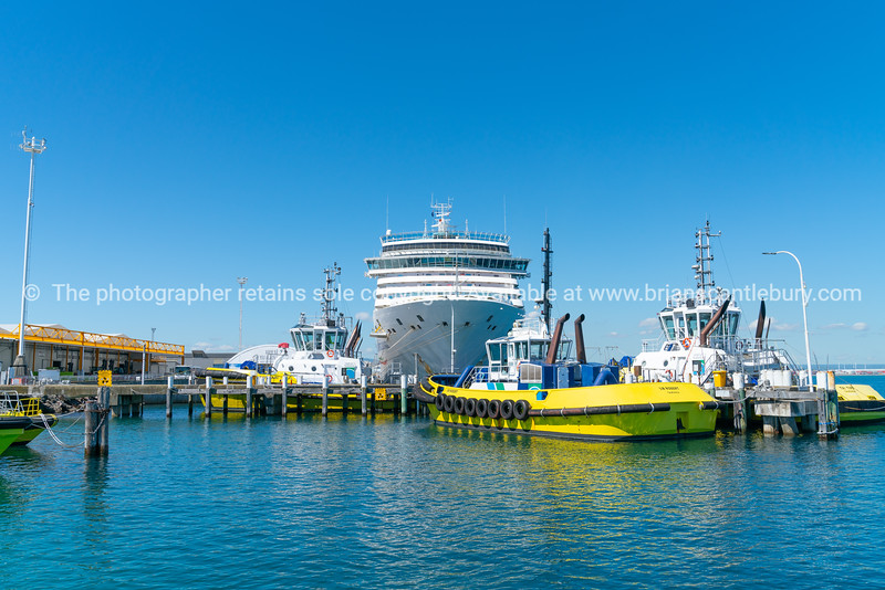 Port of Tauranga bright yellow tug and pilot boats berthed in front of large cruise liner in Port of Tauranga.