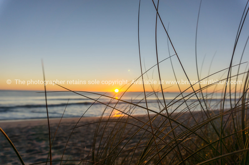 Papamoa beach, thorugh the marram  looking into sunrise