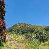 Brilliant red pohutukawa bloom on base of landmark Mount Maunganui, against blue sky.