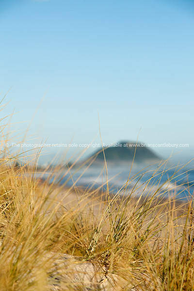 Mount Maunganui through golden beach grass at Papamoa.