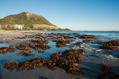 Mount Maunganui oceanbeach scenics, seaweed washed up after a storm. See; www.blurb.com/b/3811392-tauranga mount maunganui landscape photography, Tauranga Photos; Tauranga photos, Photos of Tauranga Also see; http://www.brianscantlebury.com/Events