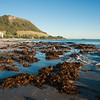 """Mount Maunganui oceanbeach scenics, seaweed washed up after a storm. See;  <a href=""""http://www.blurb.com/b/3811392-tauranga"""">http://www.blurb.com/b/3811392-tauranga</a> mount maunganui landscape photography, Tauranga Photos; Tauranga photos, Photos of Tauranga Also see; <a href=""""http://www.brianscantlebury.com/Events"""">http://www.brianscantlebury.com/Events</a>"""