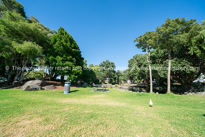 Shade trees and pond at Coronation Park on Maunganui Road, Mount Maunganui on beautiful summer day.