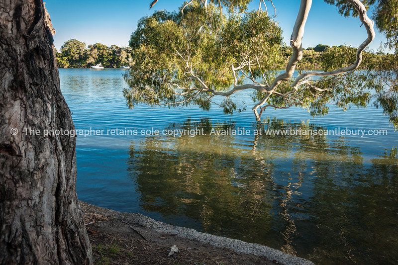 """Gum tree over the harbours edge. See;  <a href=""""http://www.blurb.com/b/3811392-tauranga"""">http://www.blurb.com/b/3811392-tauranga</a> mount maunganui landscape photography, Tauranga Photos; Tauranga photos, Photos of Tauranga Also see; <a href=""""http://www.brianscantlebury.com/Events"""">http://www.brianscantlebury.com/Events</a>"""