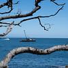 View through twisted pohutukawa tree branches across blue ocean to distant horizon