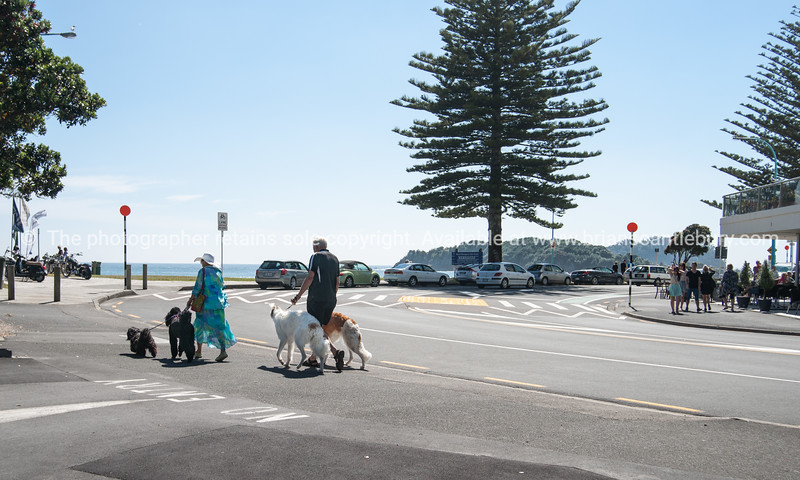 """Couple walk their dogs on the street at base of Mount Maunganui, New Zealand.<br /> <br /> Model Release; No. See;  <a href=""""http://www.blurb.com/b/3811392-tauranga"""">http://www.blurb.com/b/3811392-tauranga</a> mount maunganui landscape photography, Tauranga Photos; Tauranga photos, Photos of Tauranga Also see; <a href=""""http://www.brianscantlebury.com/Events"""">http://www.brianscantlebury.com/Events</a>"""
