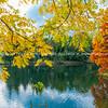 Bright autumn yellow black walnut tree leaves