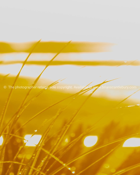 Impressionism beach scene in to morning sun