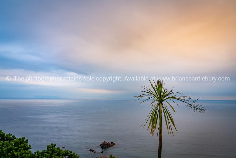 Sea and horizon and tatty cabbage tree.