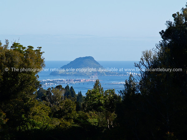 Mount Maunganui beyond bush and Sulphur Point