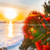 Sunrise shimmering over sea towards back-lit bright red pohutukawa flowers