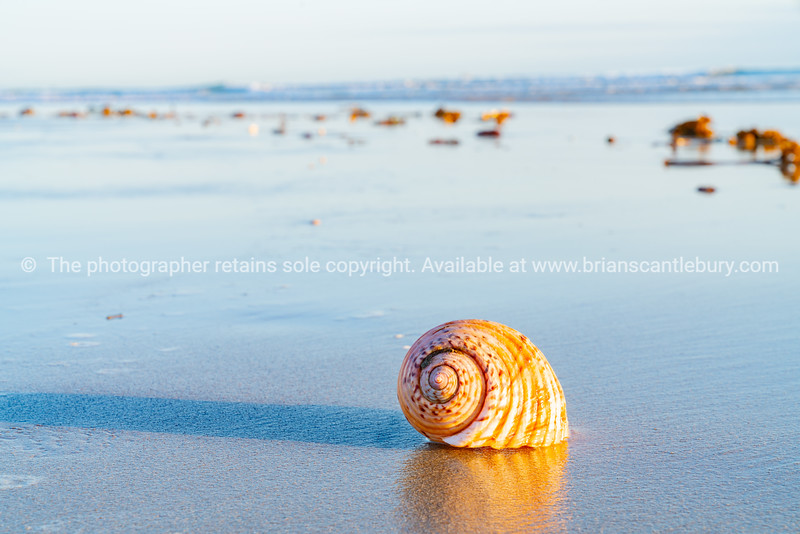 Large seashell on sand with beach and sea background