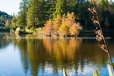 McLaren Falls Lake and Reserve, Tauranga scenics-6 See; www.blurb.com/b/3811392-tauranga mount maunganui landscape photography, Tauranga Photos; Tauranga photos, Photos of Tauranga Also see; http://www.brianscantlebury.com/Events