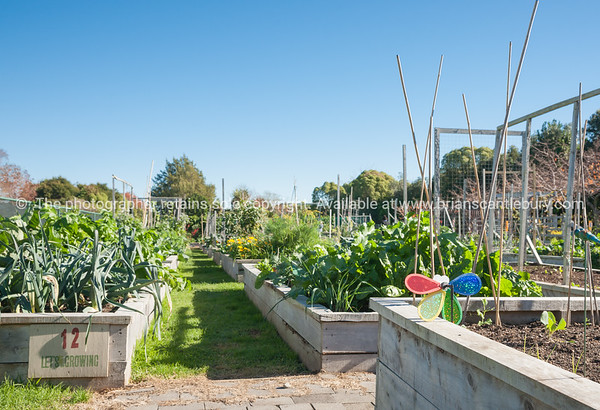 "Community garden plot, Otumoetai, Tauranga. See;  <a href=""http://www.blurb.com/b/3811392-tauranga"">http://www.blurb.com/b/3811392-tauranga</a> mount maunganui landscape photography, Tauranga Photos; Tauranga photos, Photos of Tauranga Also see; <a href=""http://www.brianscantlebury.com/Events"">http://www.brianscantlebury.com/Events</a>"