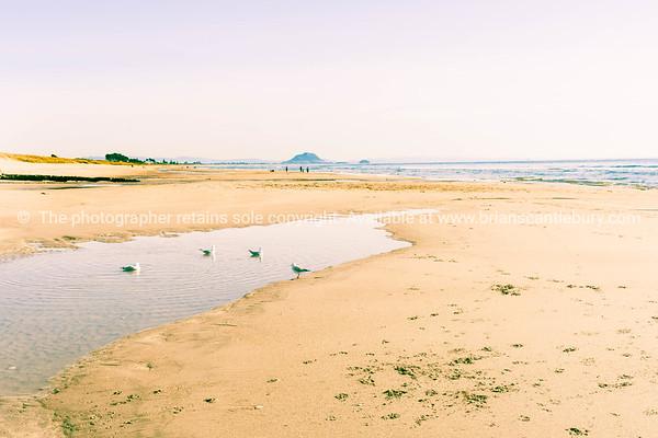 Papamoa beach. (18 of 27)